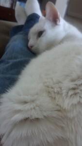 cat pic 3